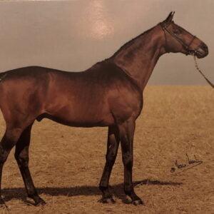 Vykort hästen Traniners Seat xx 808