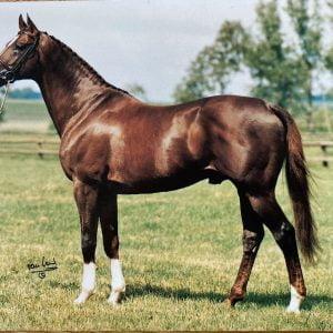 Vykort hästen Phaéton x 812